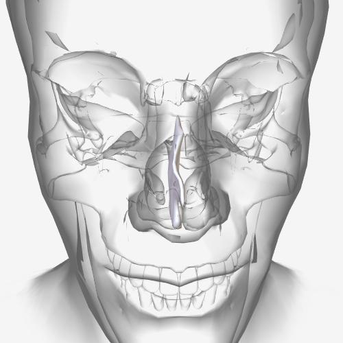 آناتومی و فیزیولوژی - انحراف سپتوم بینی (انحراف بینی )