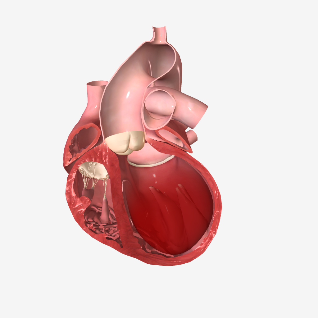 آناتومی و فیزیولوژی -  نارسایی احتقانی قلب