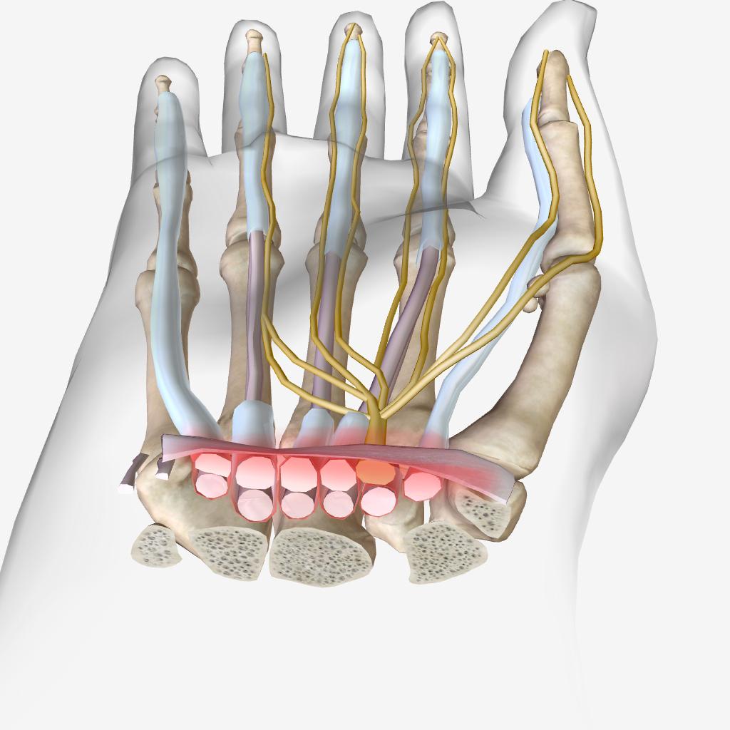 آناتومی و فیزیولوژی - سندرم تونل کارپال